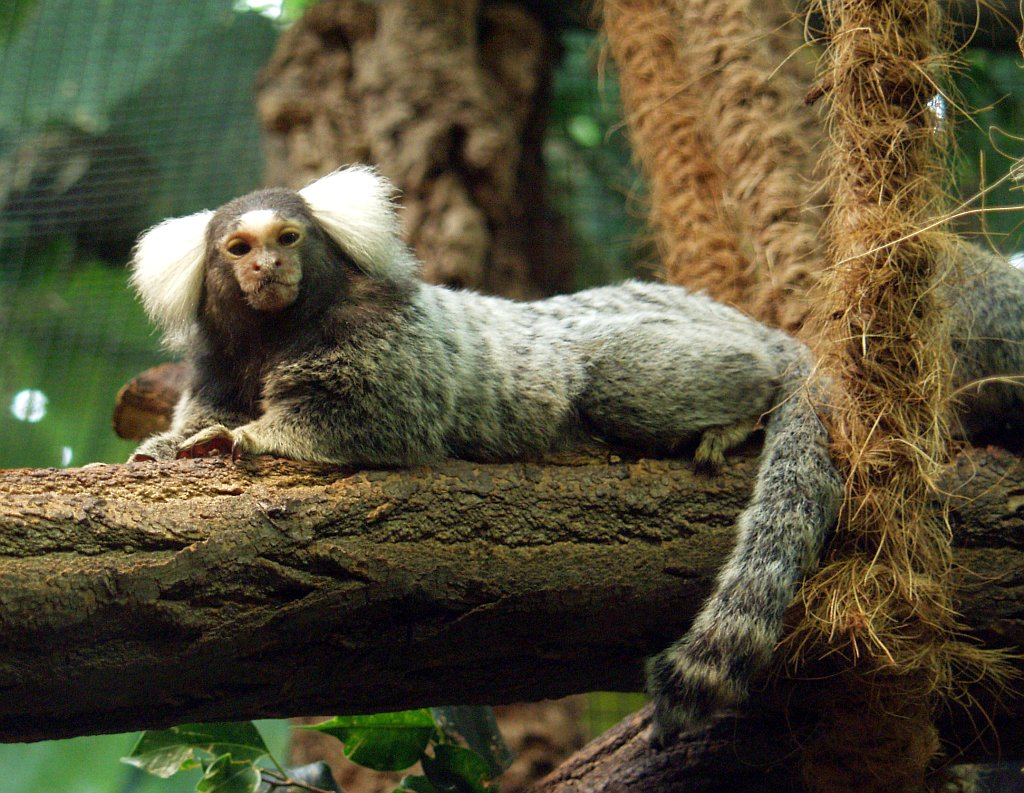 Common Marmosets arrive at Hoo