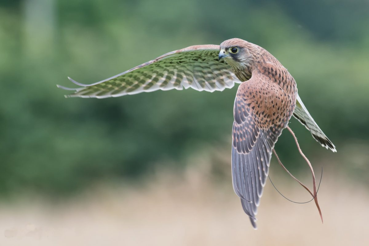 Bird of Prey Experience